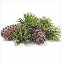 pine oil pinus sylvestris