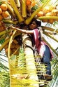 Coconut Climber