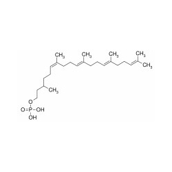 dolichol monophosphate