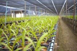 Horticulture Agrilite