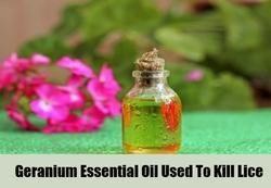 Cultivators Of Geranium Essential Oil