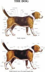 Veterinary Charts
