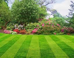 Lawns Services