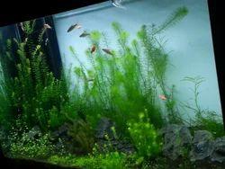 planted aquarium tanks