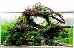 fabulous decay aquarium