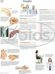 Orthopedics Charts