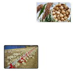 Feed Ingredients for Poultry Farms