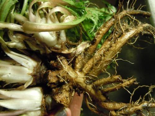 santan hosur   manufacturer of botanical herbs and