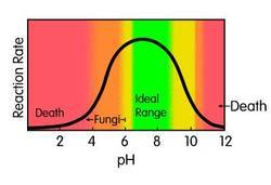 Effect of Different pH on Bacterial Growth Teaching Kit