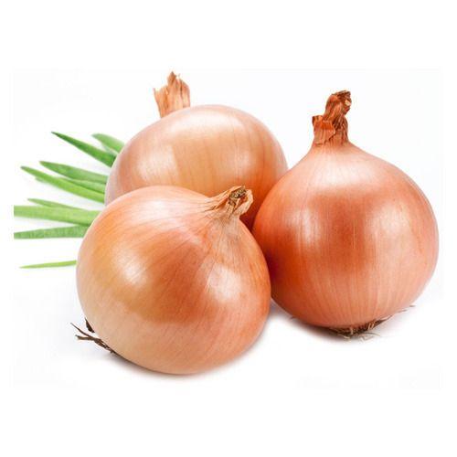 Onion in Nashik, प्याज, नासिक - Latest Price & Mandi Rates
