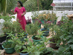 Haritha Nagari Terrace Gardening Vegetable And Fruit