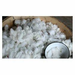 shankar 6 raw cotton