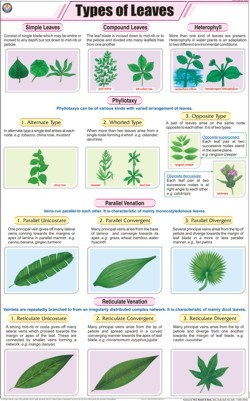 how to draw different types of leaves