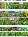 Agriculture Charts