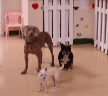 Pet Boarding and Daycare