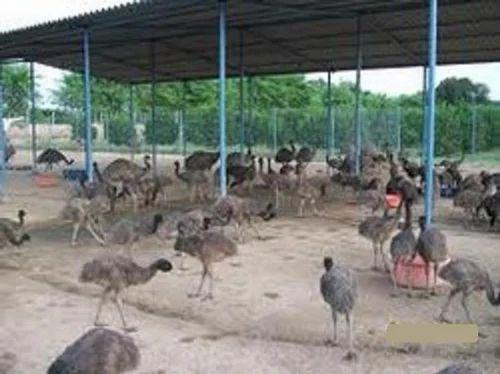 pig farming business plan punjab loan