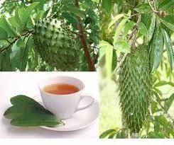 Oranic Cancer Killer Fruit Soursop/Graviola from Kerala ... Soursop Tree In Kerala