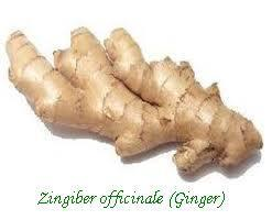Zingiber Officinale (Ginger) Extract