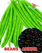 SAKURA SEED French Beans Bush Bean, A Grade, Packaging Size: 500gm