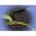 Acaiberry Herbal Extract