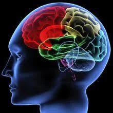 Neurology Treatment Service