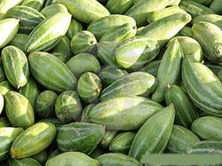 Pointed Gourds