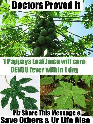 Papaya Leaves - A Powerful Cure for Cancer