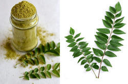 Curry Leaves India