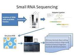 Small RNA Sequencing