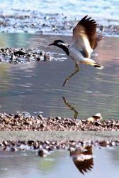 Bird Photography Services