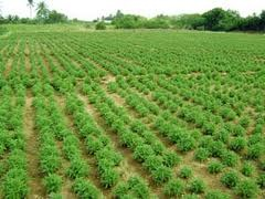 swapsushias@contract farming in India opportunities and issues
