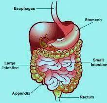 Breast, Gastro Intestinal