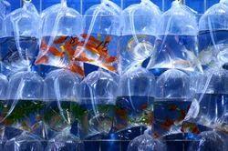 Leak Proof Fish Bags