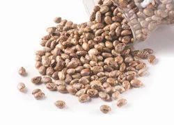 Natural Castor Seeds