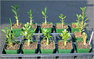 Plant Growth Regulator - View Specifications & Details of