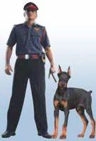 Dog Squads