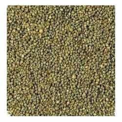 Fresh Green Millet