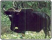 Chinnar Wildlife Sanctuary Tours, Wildlife Tour Packages