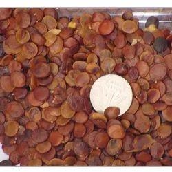 Gliricidia Sepium Seed