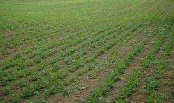 Agricultural Lands Rental