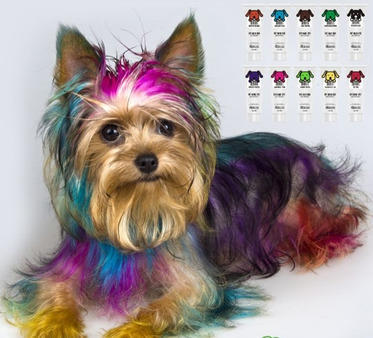 Pet Hair Dye, Personal Care & Cosmetic Products | Petswill ...