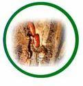 Woodborer Treatment Services