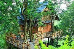 Bamboo Tree House
