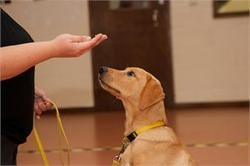 Hand Signal Dog Training