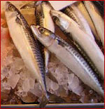 Mackerel Fish - Specification