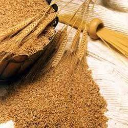 Whole Grain Wheat