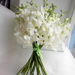 Hybrid White Orchids For Decoration