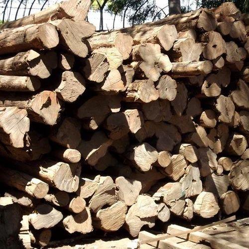 White Ghana Teak Wood, Rs 1900 /cubic feet, Cauvery Woods