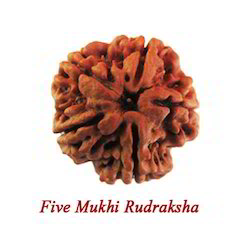 Five Mukhi Rudraksha
