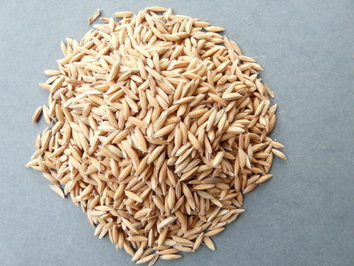 Paddy Seed